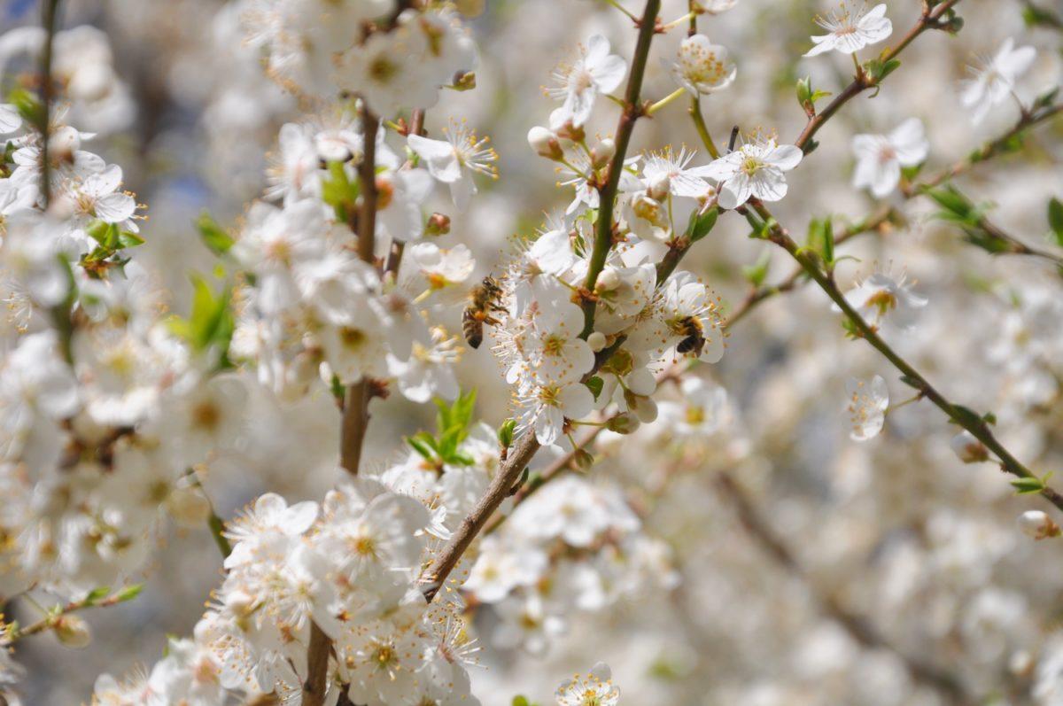 Včelí matky kladou. Veselé Velikonoce z Rusavy!