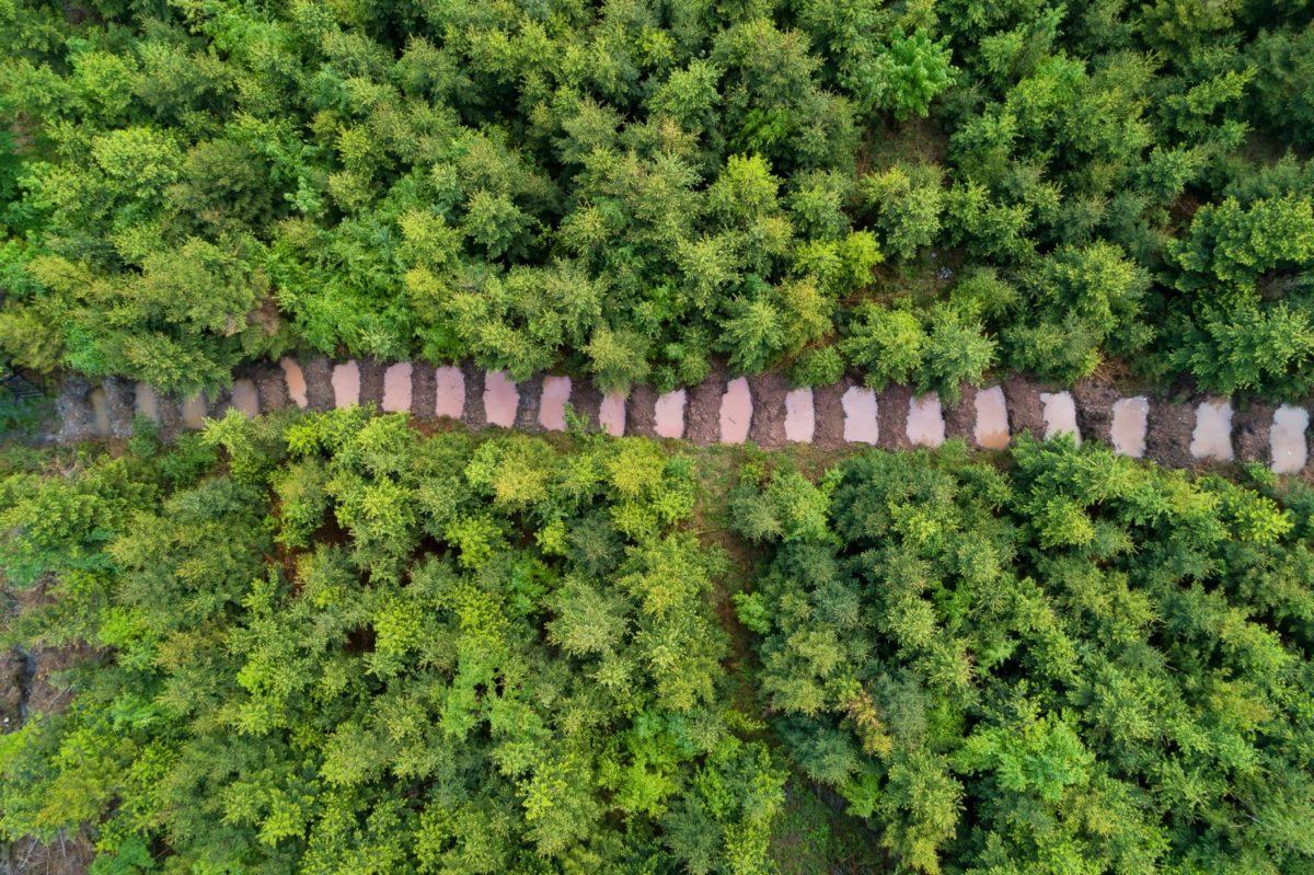 Voda pro lesy – reportáž z Beskyd a Košic